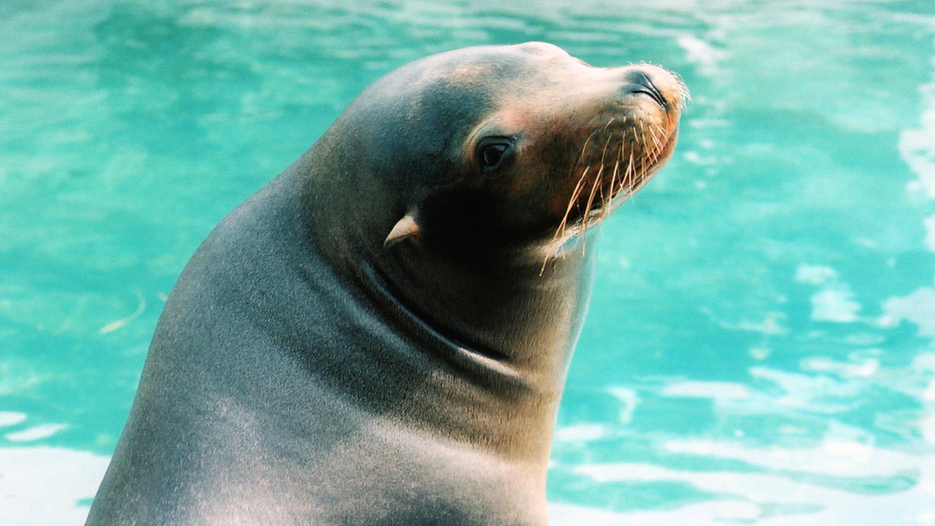 filephoto Sea Lion