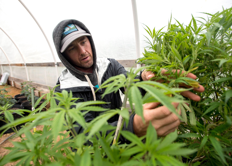 Производство марихуаны статья влияние конопли на и психику