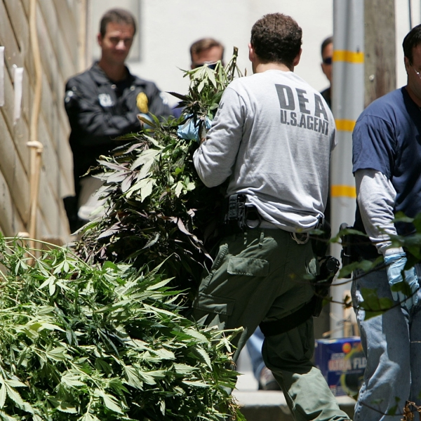 Federal agents seize marijuana plants during a raid of a medical marijuana club June 22, 2005 in San Franciso (Credit: by Justin Sullivan/Getty Images)