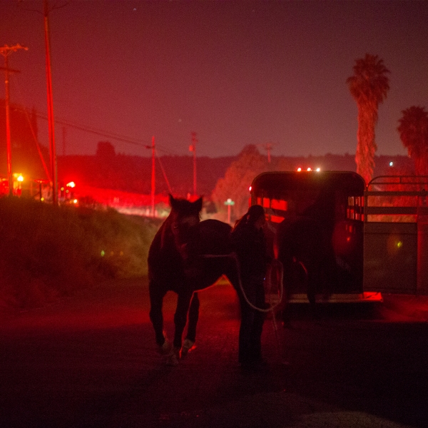 Horses that survived the Lilac Fire in their stalls are loaded onto a trailer in the early morning hours of Dec. 8, 2017, near Bonsall. (Credit: David McNew / Getty Images)