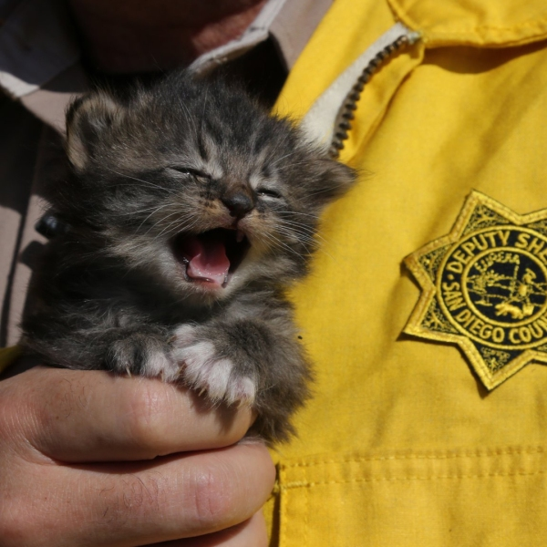 San Diego Sheriff Bill Gore tweeted this photo of one of the rescued kittens.