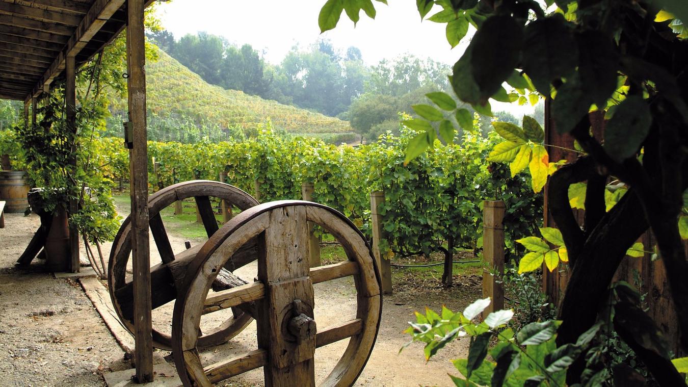 Rupert Murdoch's Bel-Air vineyard is shown on the Moraga Estate website.