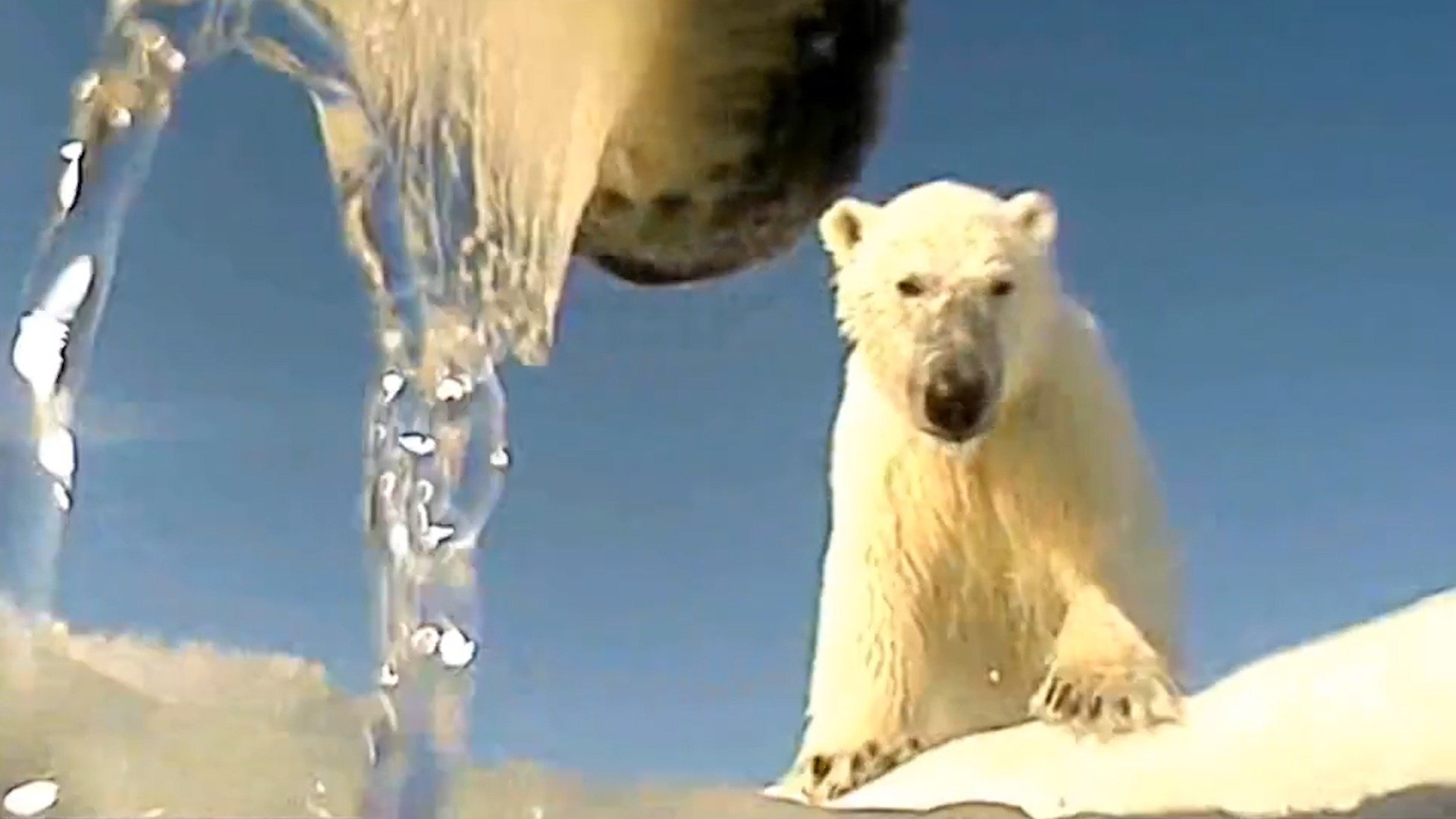 A polar bear is seen in a file photo. (Credit: U.S. Geological Survey)