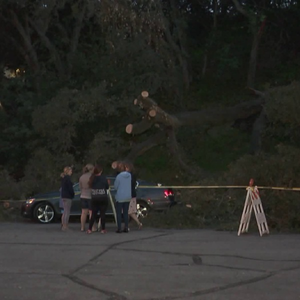 A tree is seen in Glendale on March 26, 2018, a day after it toppled over and struck a pedestrian. (Credit: KTLA)