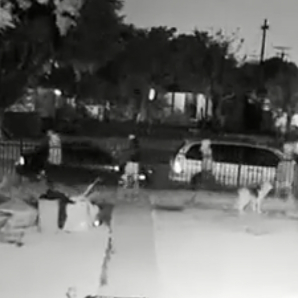 Four people are seen walking past two dogs in front of a South L.A. home on March 9, 2018. One of the people later stopped and fatally shot one of the dogs. (Credit: LAPD)