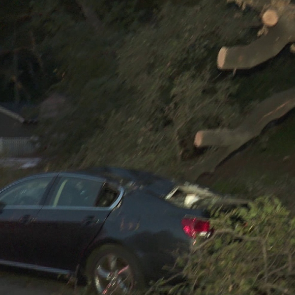A tree is seen hanging over a damaged car on March 25, 2018, after falling and striking a woman earlier in the day. (Credit: KTLA)