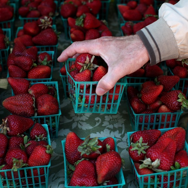 A customer chooses a basket of strawberries at a farmers market on June 13, 2012, in San Francisco. (Credit: Justin Sullivan/Getty Images)