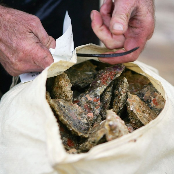 An oyster sack is seen in this file photo. (Credit: Ross Land/Getty Images)