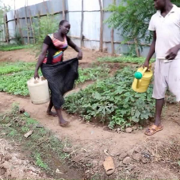 A garden is seen inside the refugee camp in Kakuma. (Credit: KTLA)