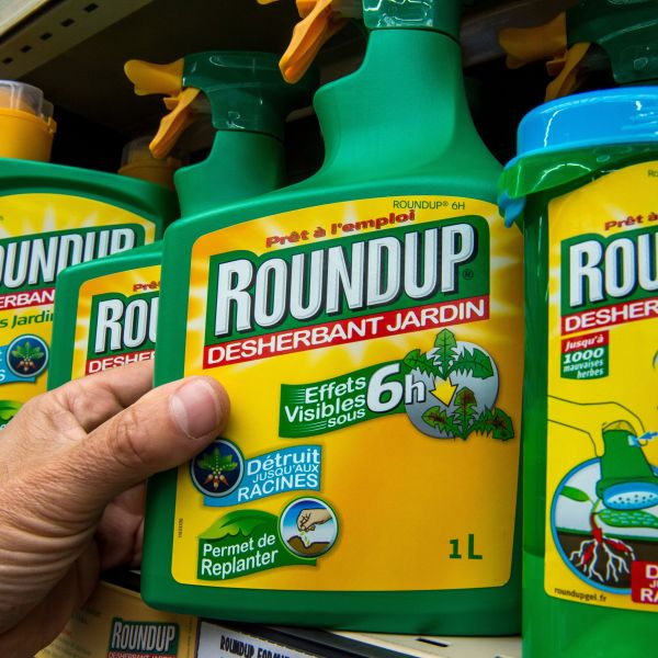 This picture taken on June 15, 2015 shows a bottle of Monsanto's 'Roundup' pesticide in a gardening store in Lille. (Credit: Philippe Huguen/AFP/Getty Images)