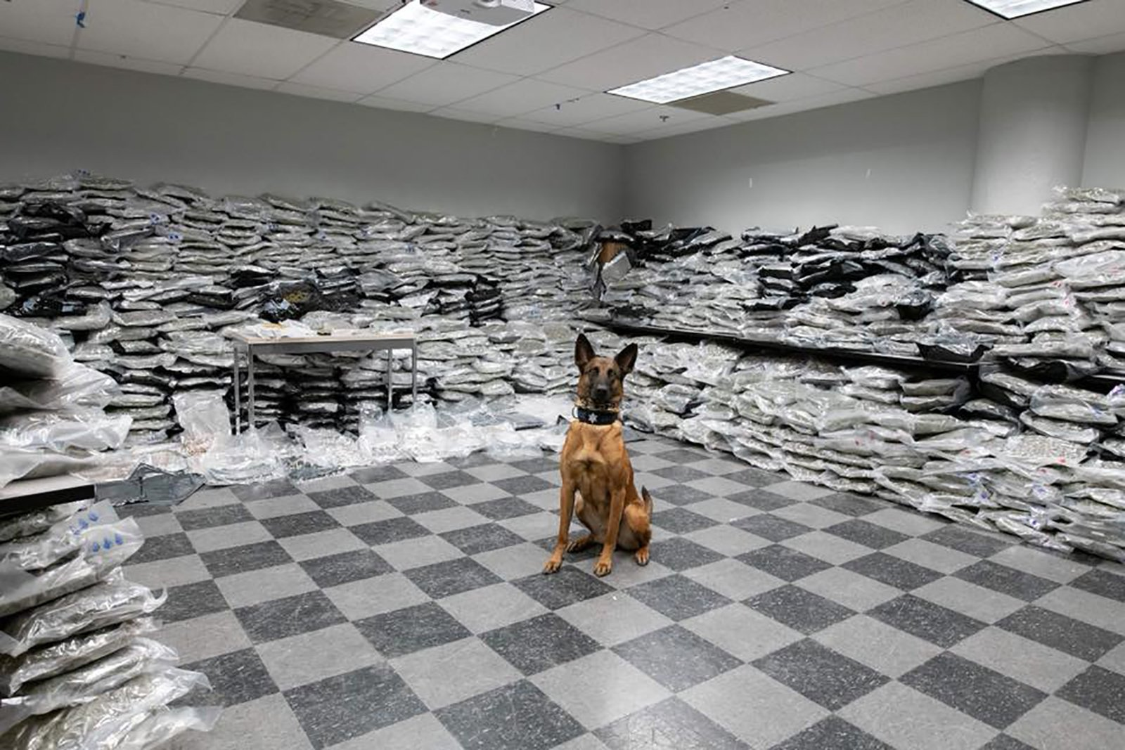 Chicago Police Department officials released this photo of a K-9 that officers seize over $10 million worth of marijuana on Thursday.