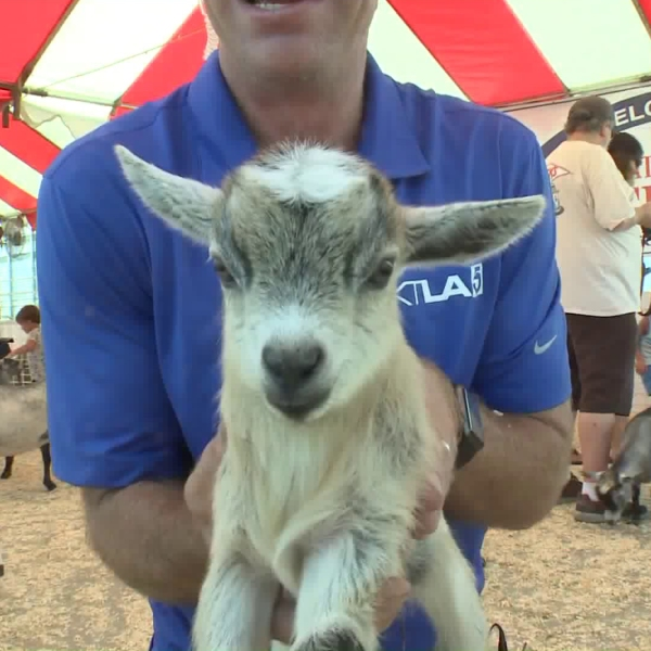 KTLA's Chip Yost is shown with a new friend on July 13, 2018, at the Orange County Fair in Costa Mesa.