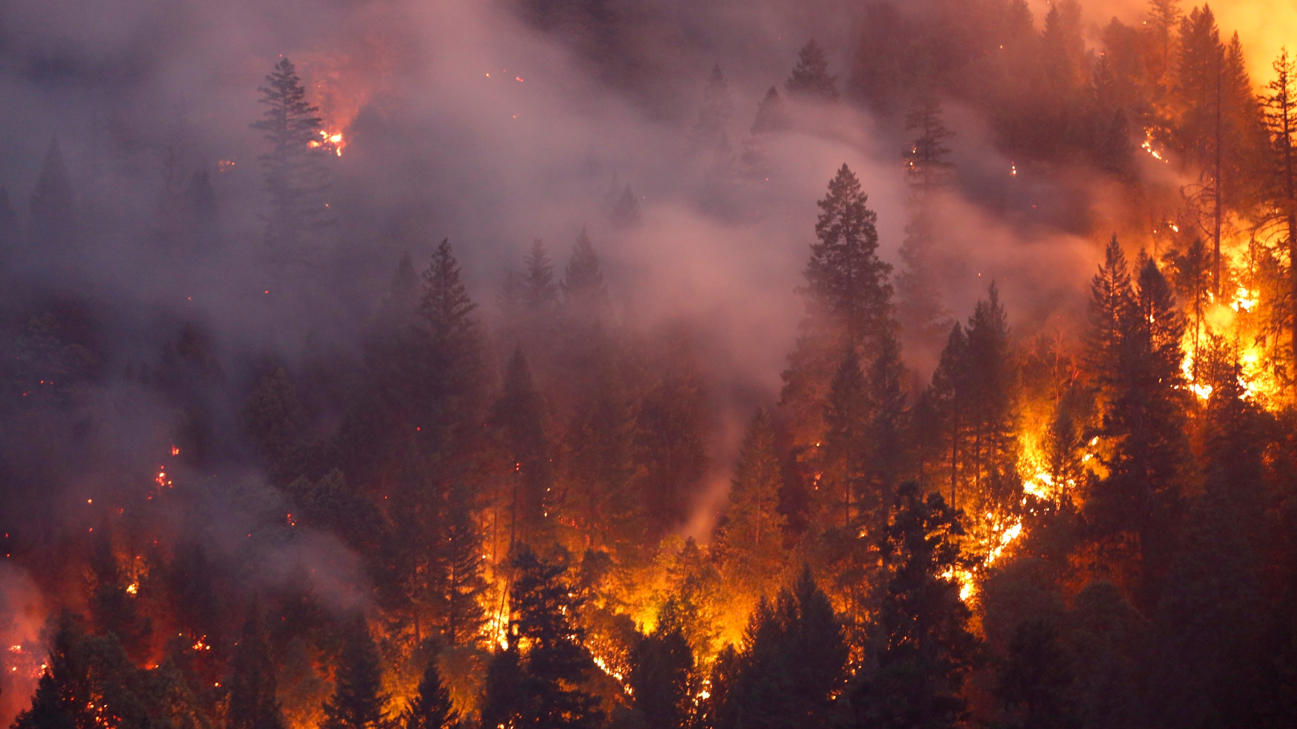 Forest burns in the Carr Fire on July 30, 2018 west of Redding. (Terray Sylvester/Getty Images)