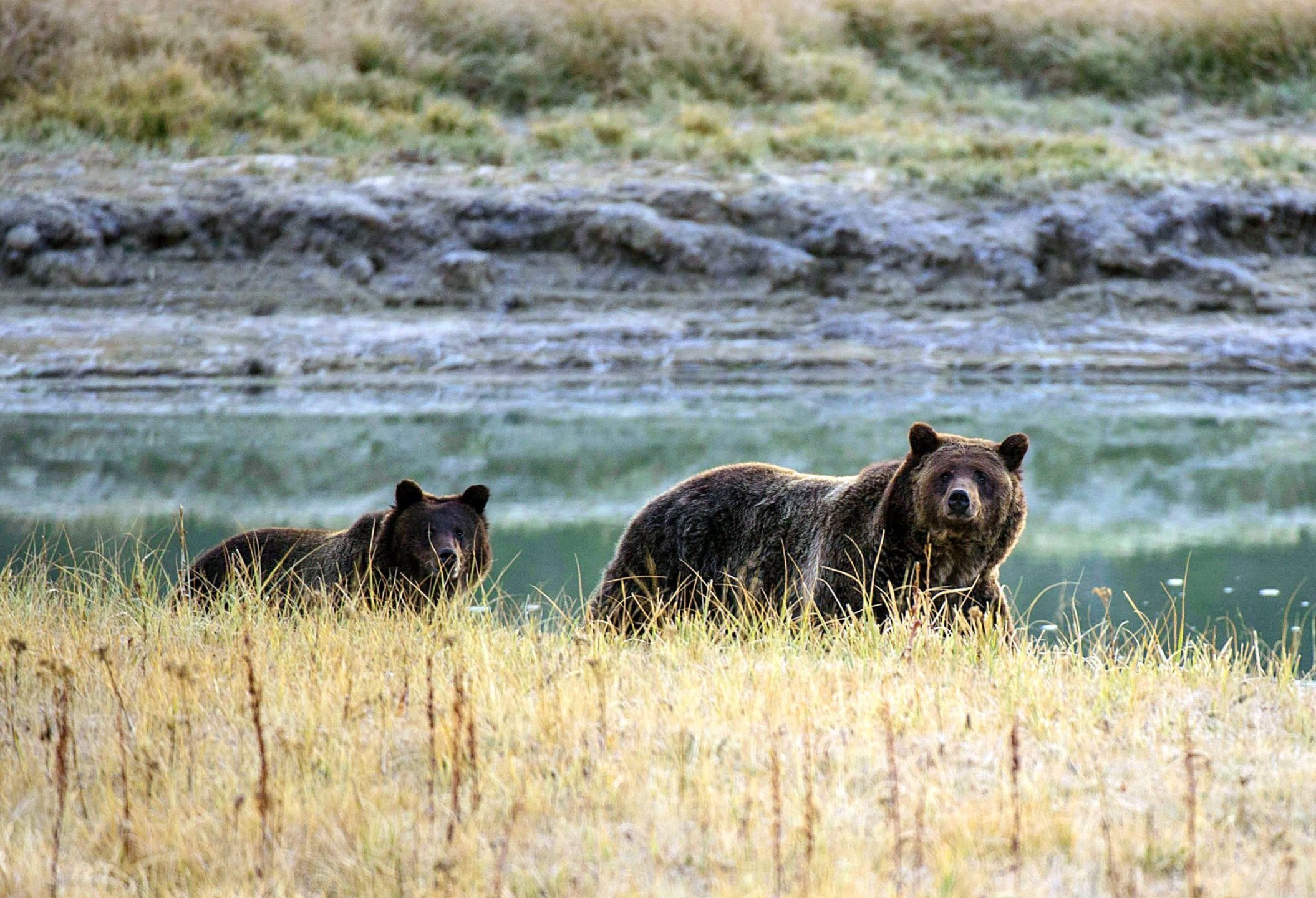 The Yellowstone National Park is America's first national park and extends through parts of Wyoming, Montana and Idaho. The animals are seen in this undated photo. (Credit: Karen Bleier/AFP/Getty Images via CNN)