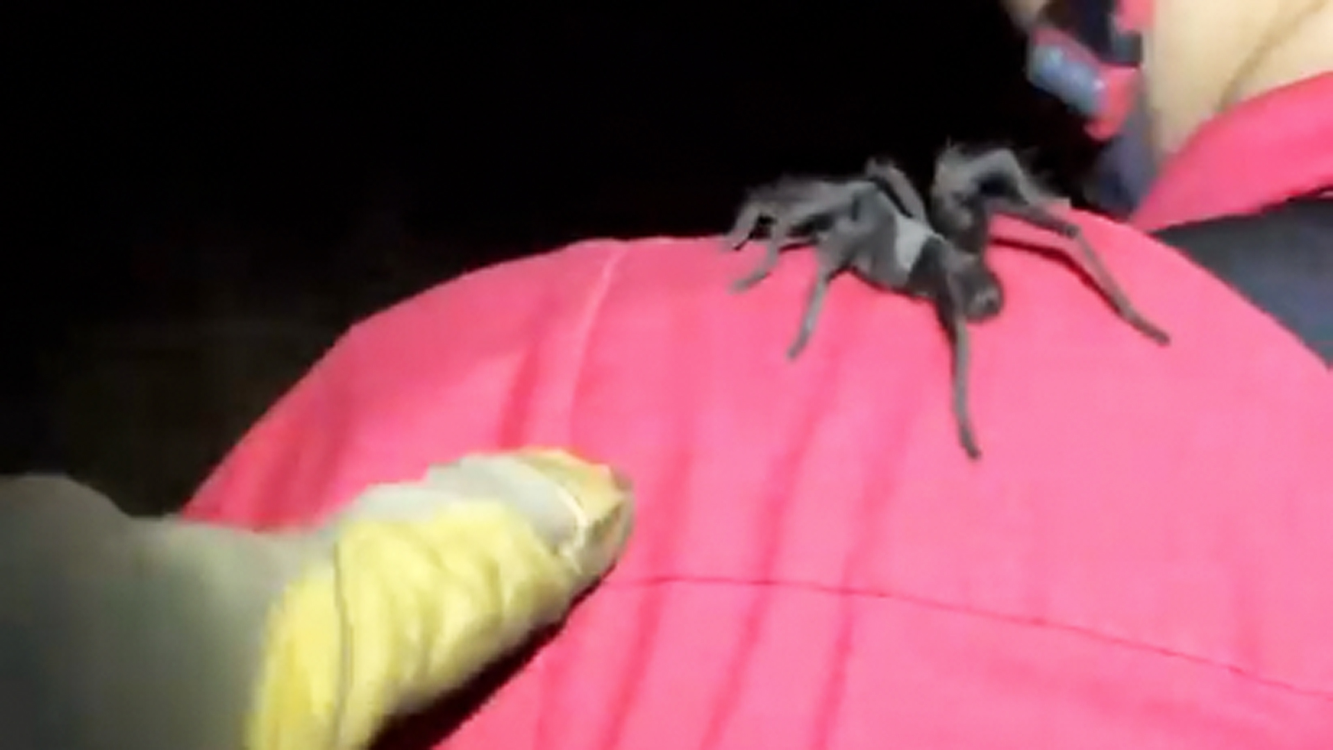 A tarantula is seen in an image posted to the Altadena Mountain Rescue Team's Facebook page.