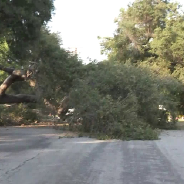 A toppled tree knocked out power in some parts of San Marino on Aug. 11, 2018. (Credit: KTLA)