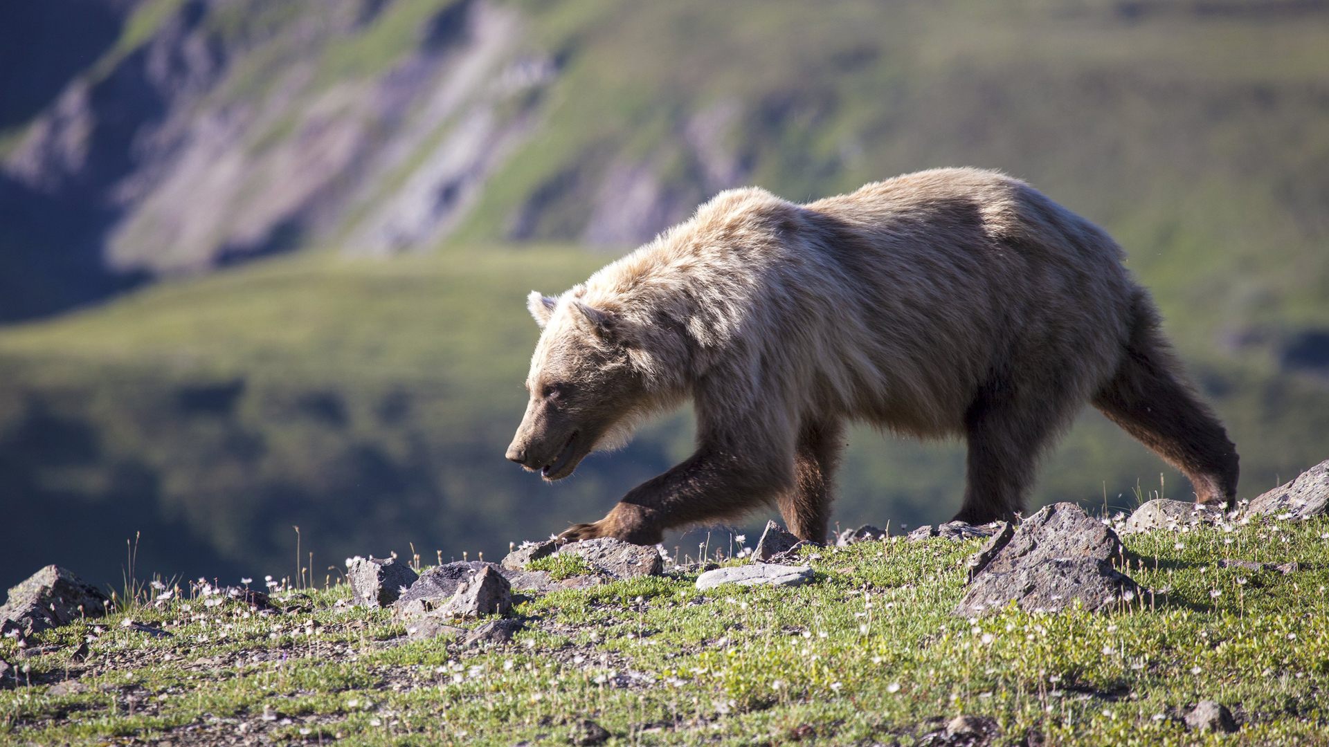 A bear is seen in a file photo from the National Park Service.