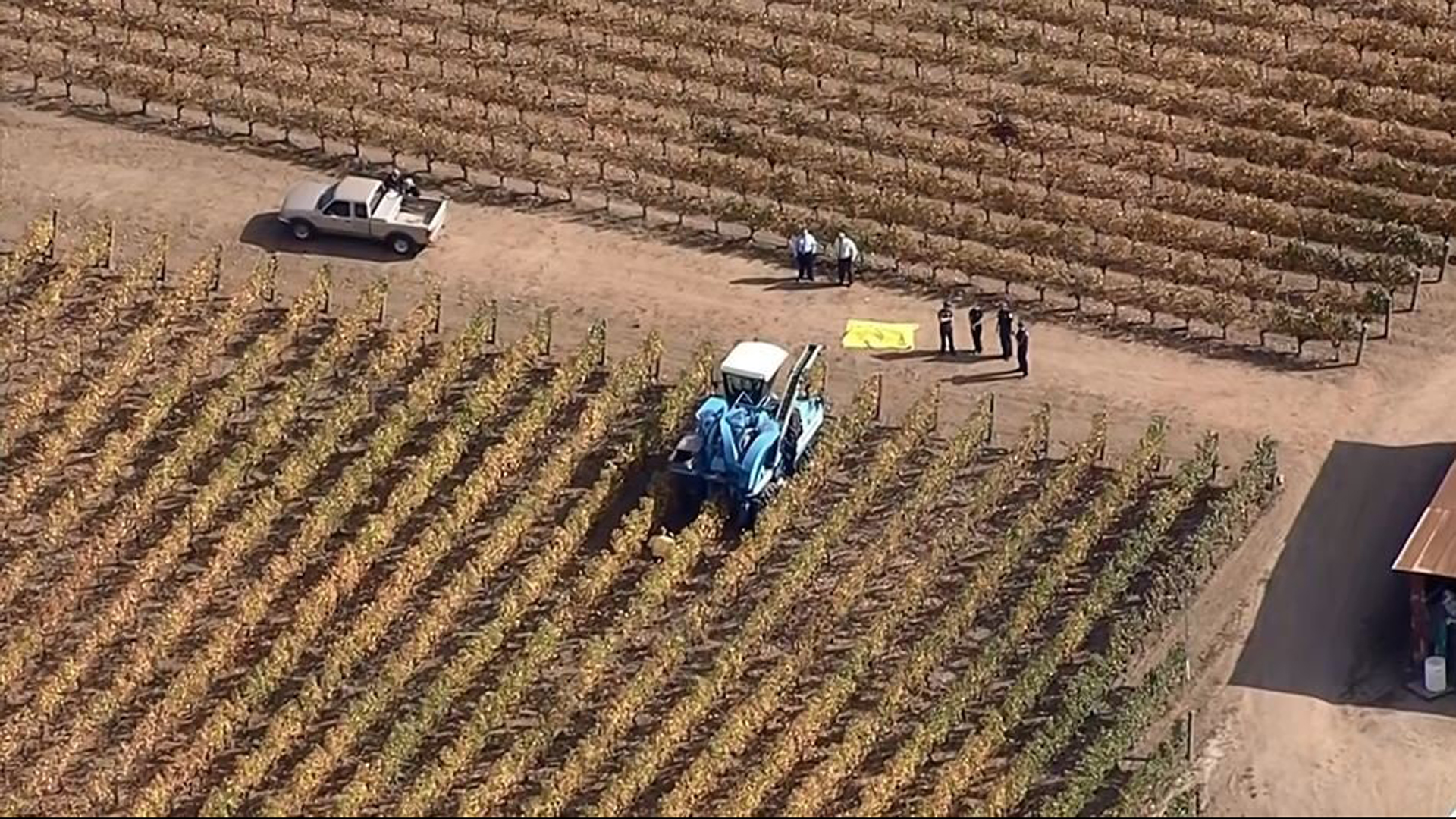 A Napa vineyard worker was killed in an accident involving a grape harvesting machine, authorities said. (Credit: KPIX via CNN Wire)
