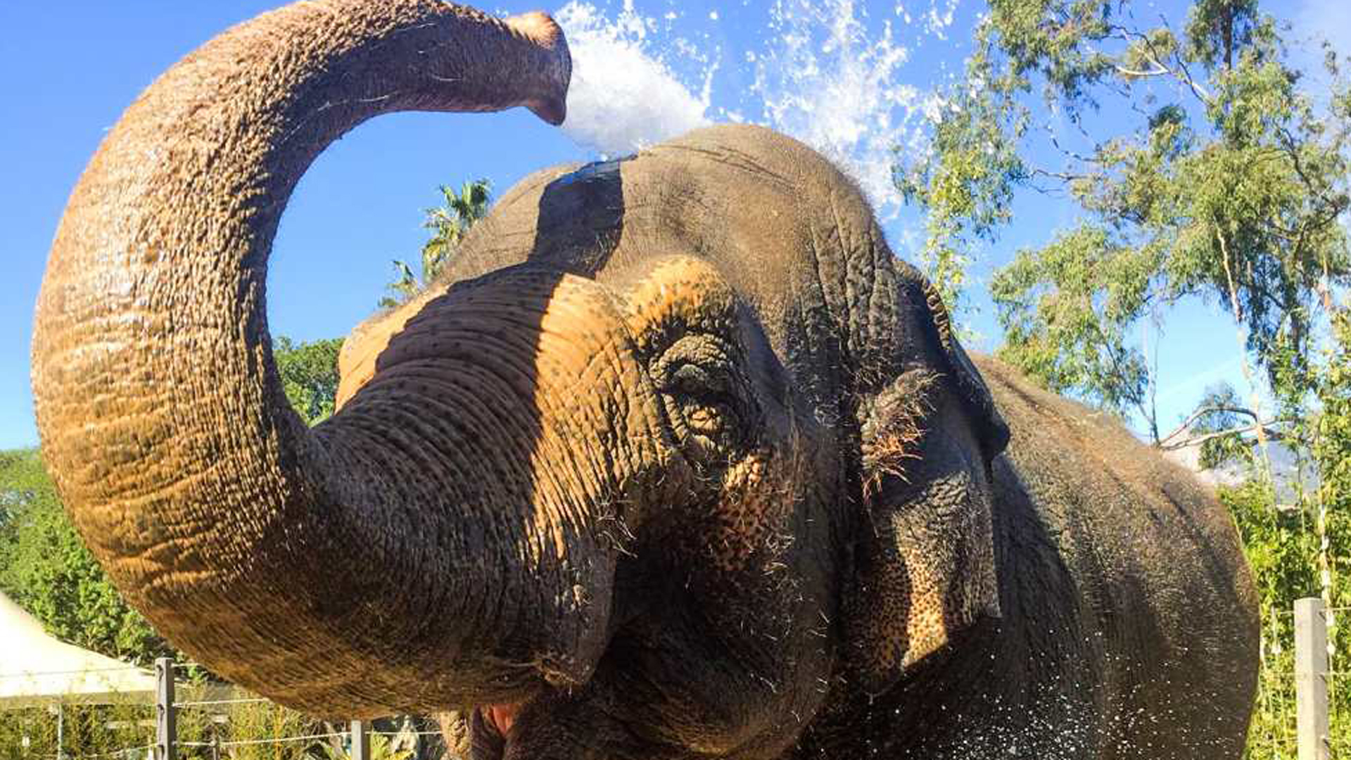 Sujatha, a 47-year-old Asian elephant at the Santa Barbara zoo who had to be euthanized, is seen in a photo posted to the facility's website on Oct. 17, 2018.