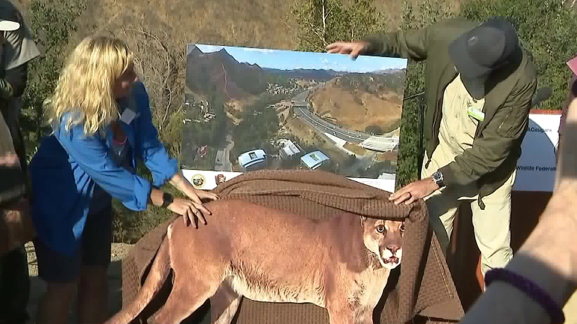 Wildlife officials unveiled a new image of the 101 Freeway wildlife overpass on Oct. 23, 2018. (KTLA)
