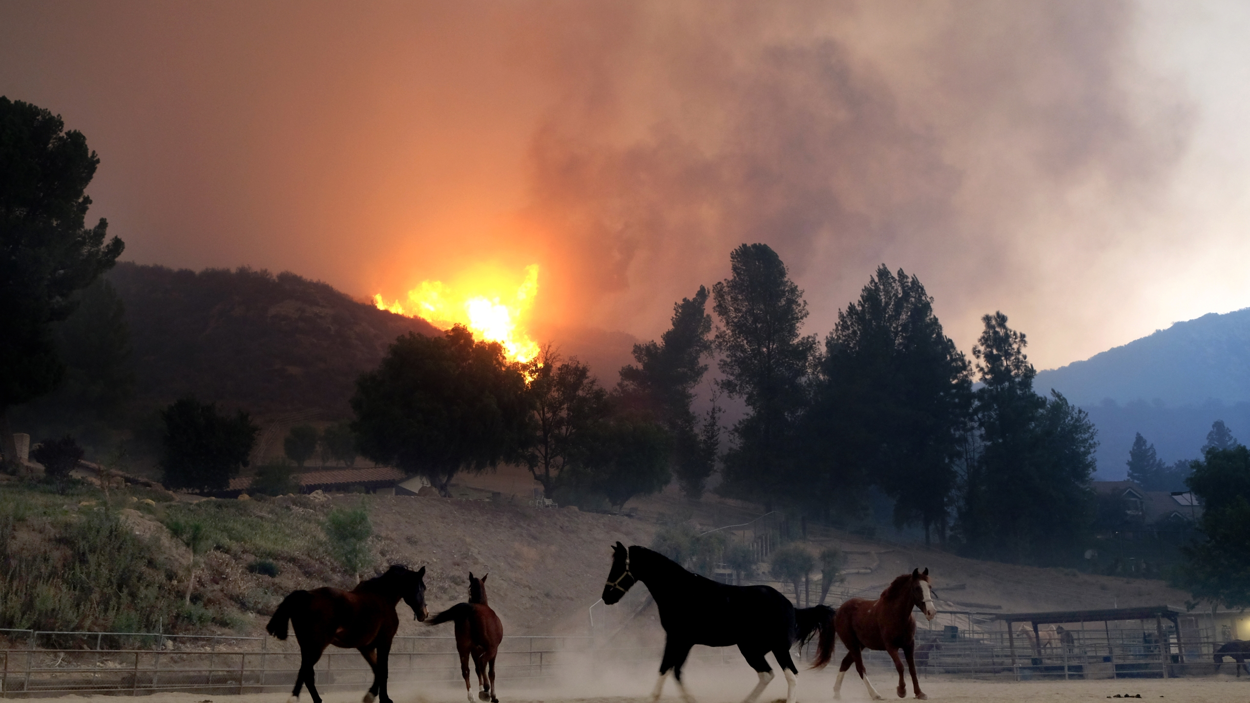 Horses are spooked as the Woolsey Fire moves through the property on Cornell Road near Paramount Ranch on November 9, 2018 inAgoura Hills, California. (Credit: Matthew Simmons/Getty Images)