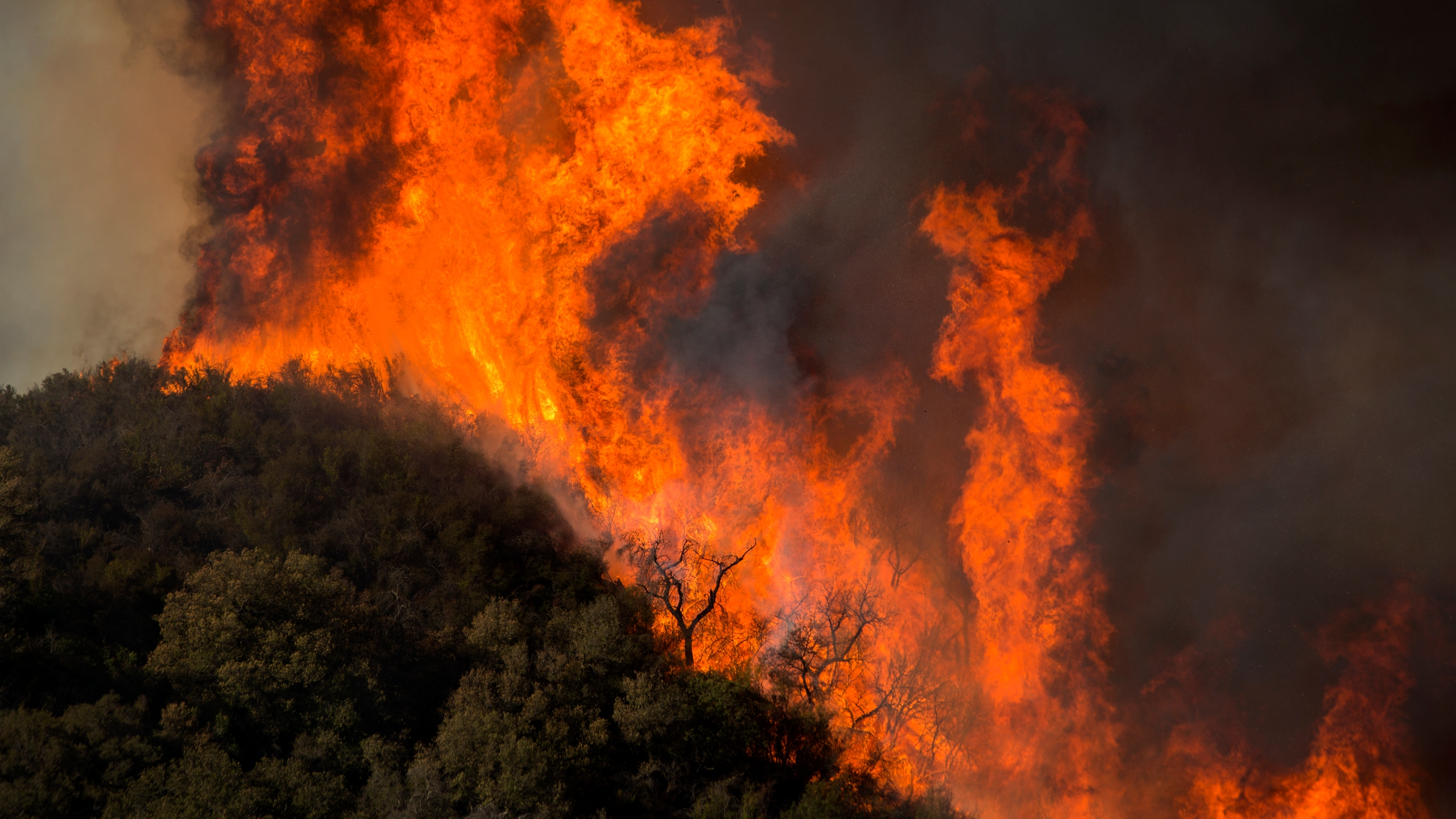 Wind-driven flames move across Malibu Creek State Park during the Woolsey Fire on Nov. 9, 2018, near Malibu, California. (Credit: David McNew/Getty Images)