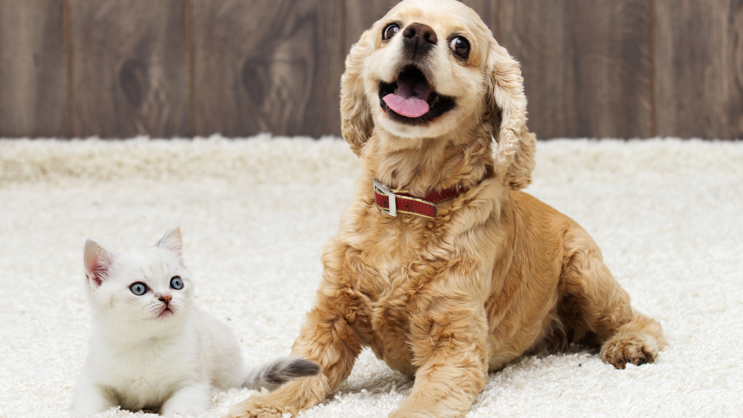 A kitten and a puppy are seen in this file photo. (Credit: Getty Images)