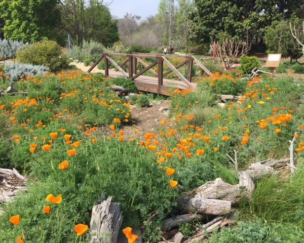 The L.A. County Arboretum and Botanic Garden is seen in an image posted on the facility's Facebook page in April 2018.