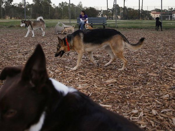 The Brentwood dog park, seen in this undated photo, is a flashpoint in the ongoing debate about development of the VA's West Los Angeles campus for hundreds of homeless veterans. (Credit: Katie Falkenberg / Los Angeles Times)