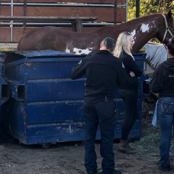 Authorities tend to a horse that became stuck in a dumpster in Huntington Beach on Jan. 18, 2019. (Credit: Huntington Beach Fire Department)