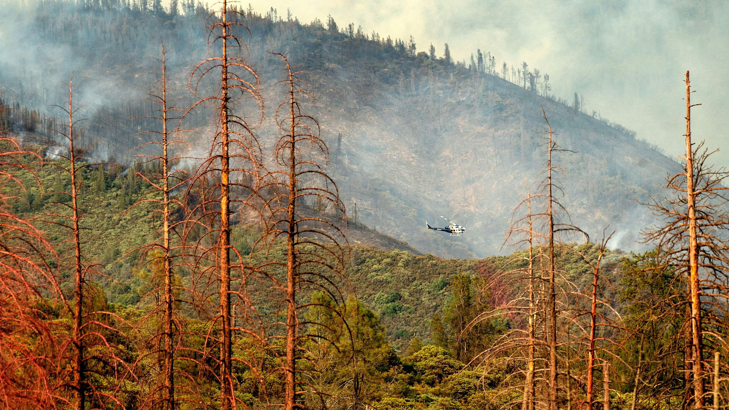 Dead trees line a clearing as a helicopter battling the Ferguson fire passes behind in the Stanislaus National Forest on July 22, 2018. (Credit: NOAH BERGER/AFP/Getty Images)