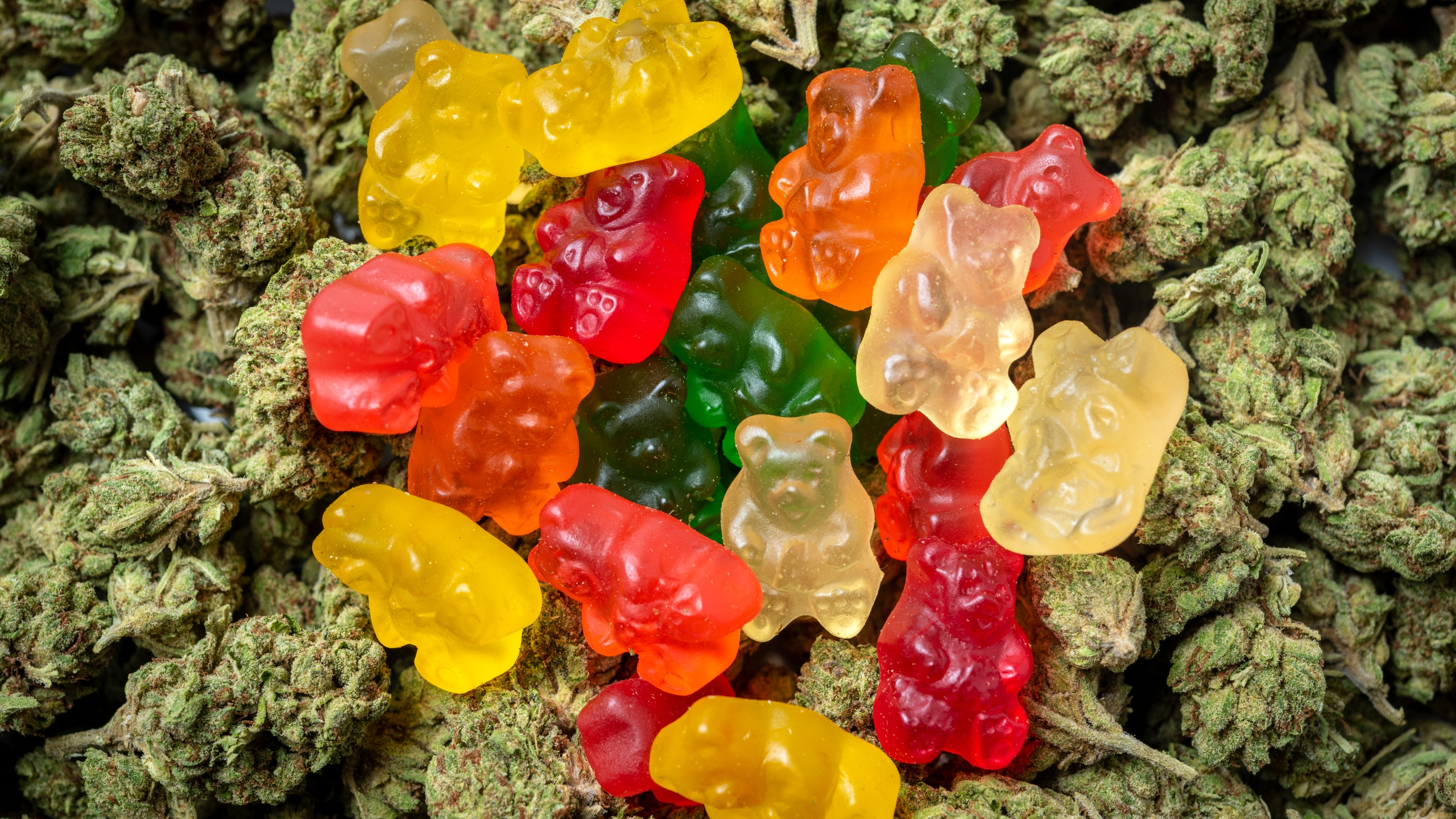 A stack of marijuana gummy bear candies is seen in this file photo. (Credit: iStock / Getty Images)