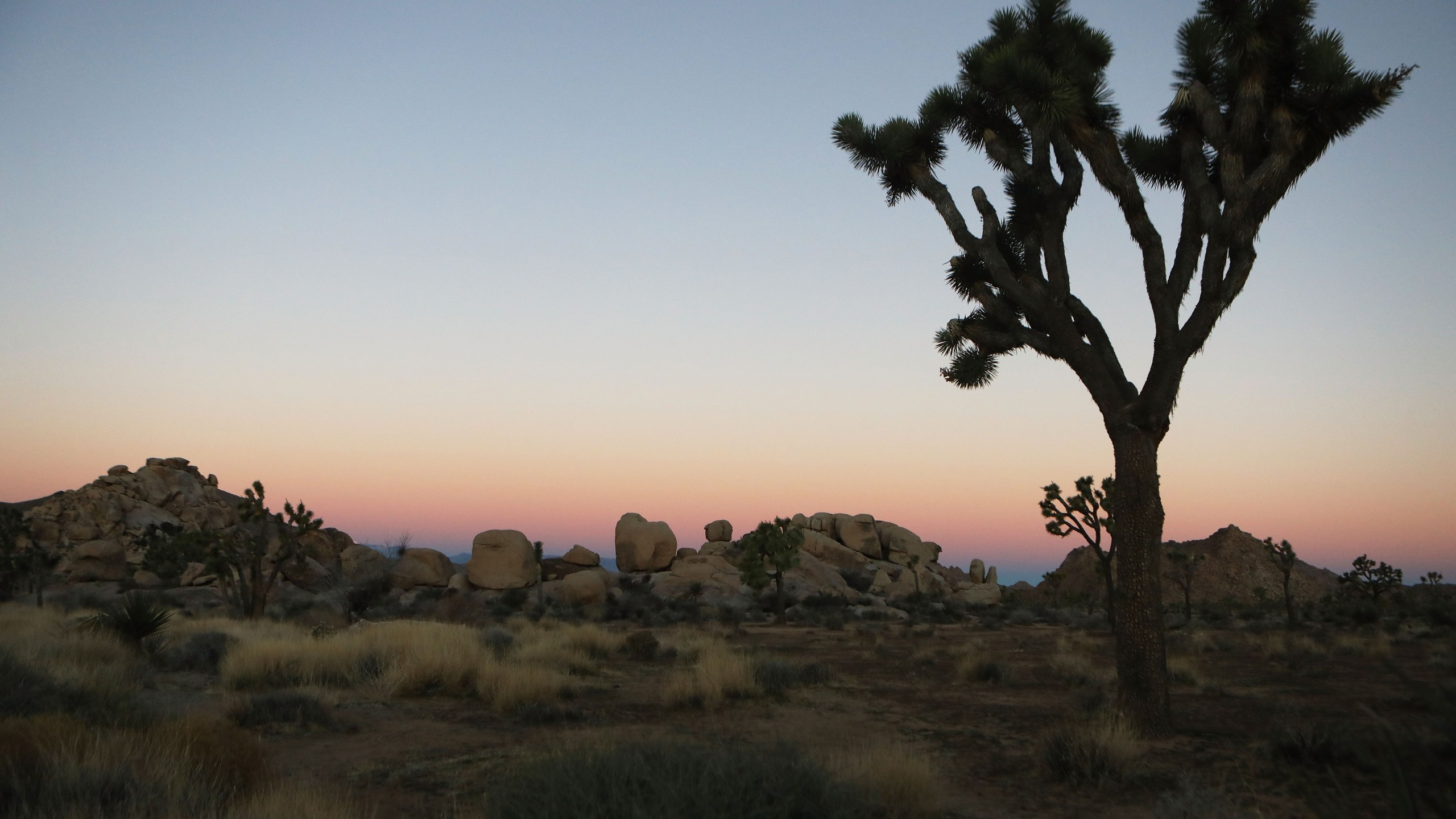 A Joshua tree stands at Joshua Tree National Park on Jan. 4, 2019. (Mario Tama / Getty Images)