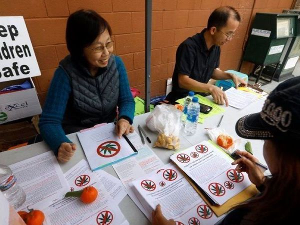 Nancy Fang, left, Zig Jiang, middle, and Lily Chan, right, prepare fliers to distribute against the approval of future marijuana production sites. (Credit: Carolyn Cole / Los Angeles Times)