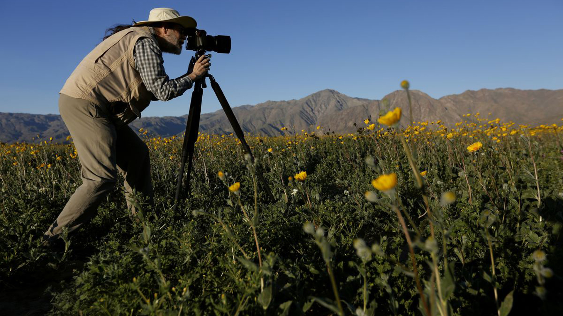 Mike Lightner photographs flowers, in the Anza Borrego Desert State Park in San Diego County in March 2017. (Credit: Francine Orr / Los Angeles Times)