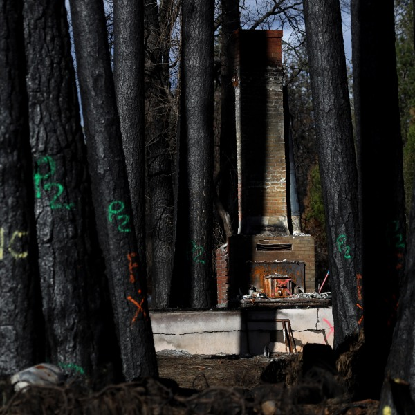 Blackened trees marked for removal stand in front of a home in Paradise that was destroyed by the Camp Fire on Feb. 11, 2019. (Credit: Justin Sullivan / Getty Images)