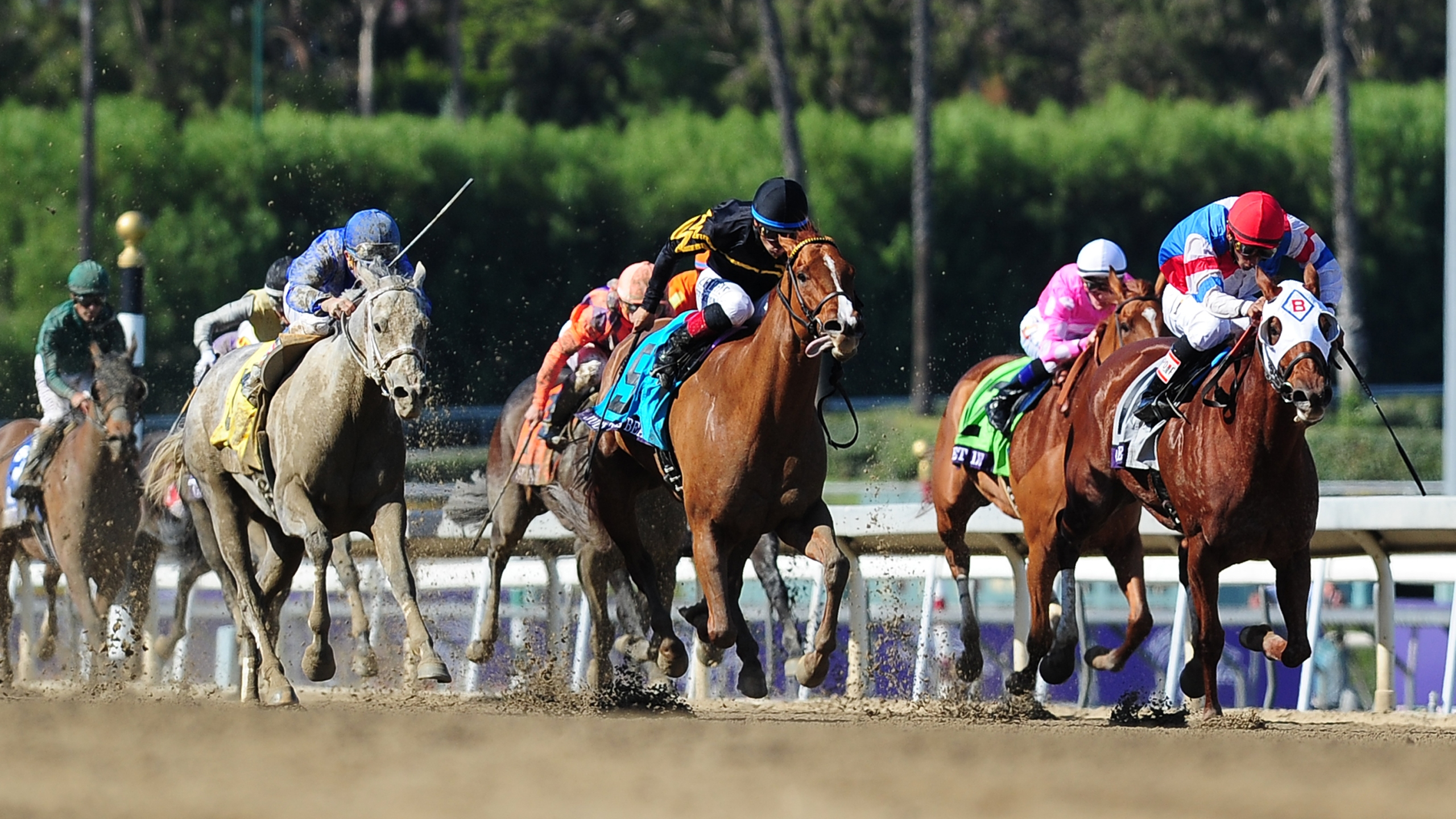 Horses run during a race at the Santa Anita Park race track in Arcadia on Nov. 2, 2013. (Credit: Frederic J. Brown/AFP/Getty Images)