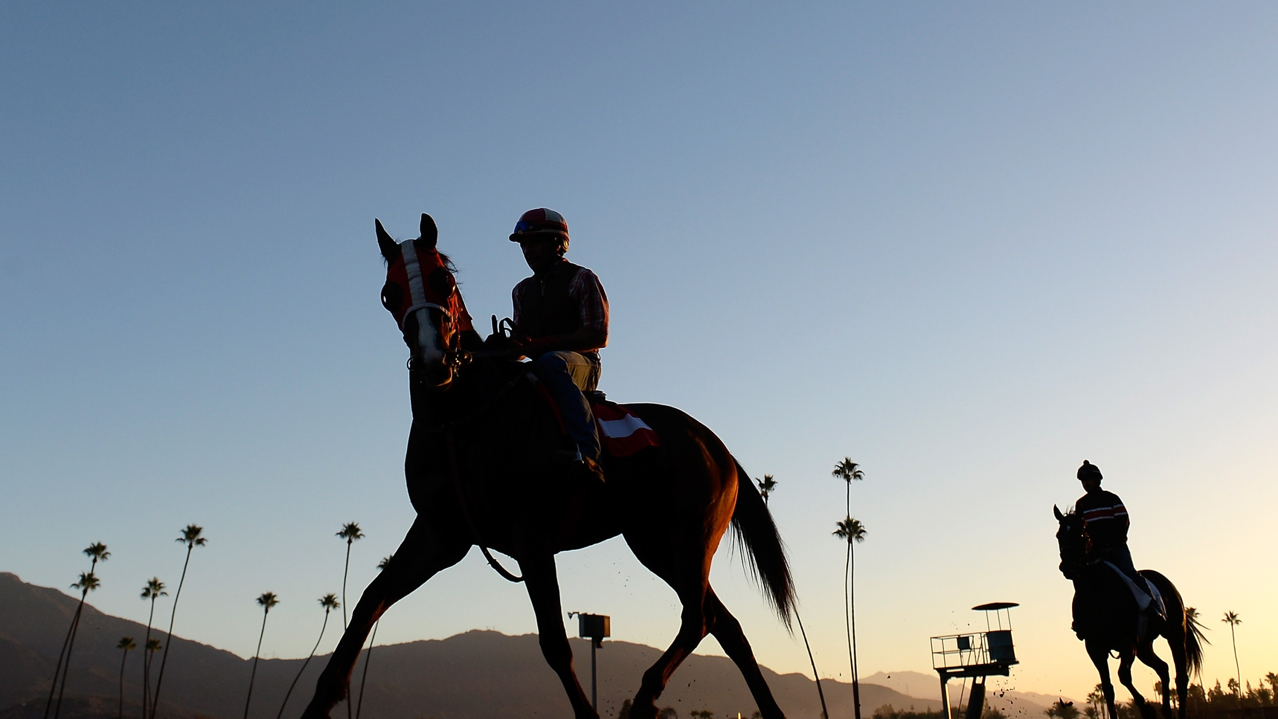 Horses train in preparation for the 2014 Breeder's Cup at Santa Anita Park on October 29, 2014 in Arcadia, California. (Credit: Harry How/Getty Images)