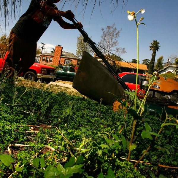A man mows grass and weeds to outside a home in Altadena on March 27, 2008. (Credit: David McNew / Getty Images)