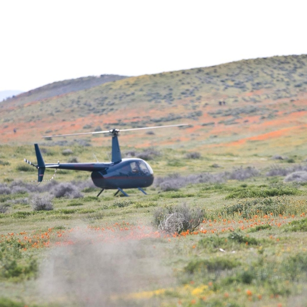 A visitor took this photo of the helicopter landing in the middle of the poppy fields. It was shared on the Antelope Valley California Poppy Fields Facebook page on March 26, 2019.