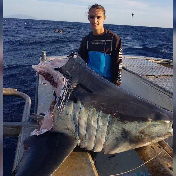 A huge mako shark caught by an Australian fisherman was half-devoured by an even bigger predator. (Credit: CNN)