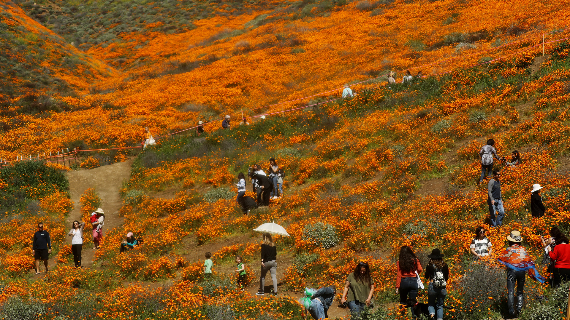 People visit a super bloom of poppies blanketing the hills of Walker Canyon on March 12, 2019 near Lake Elsinore. (Credit: Mario Tama/Getty Images)