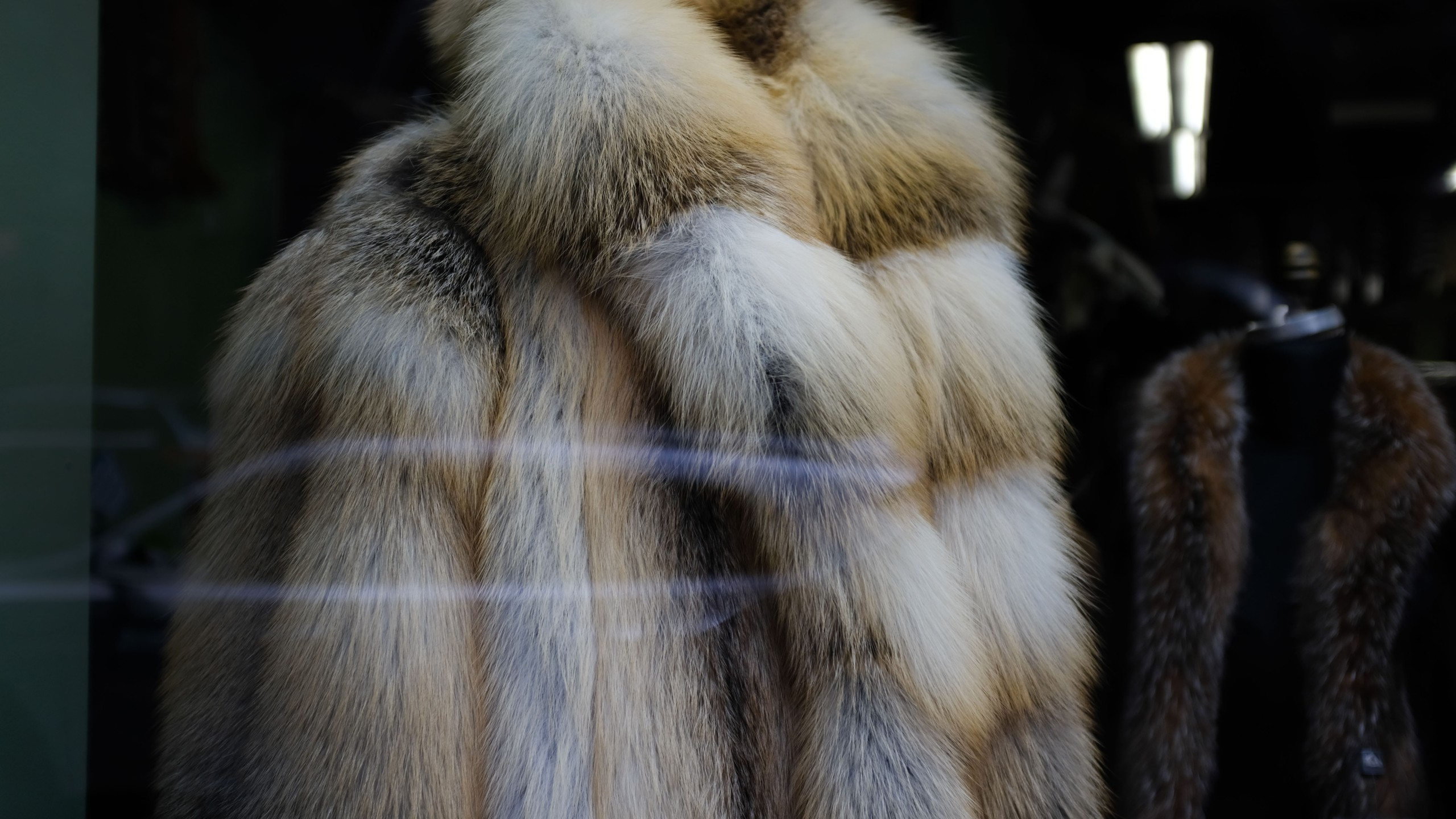 Fur coats and hats are displayed in the window of a fur store in the fur district in Manhattan on March 29, 2019 in New York City. (Credit: Spencer Platt/Getty Images)