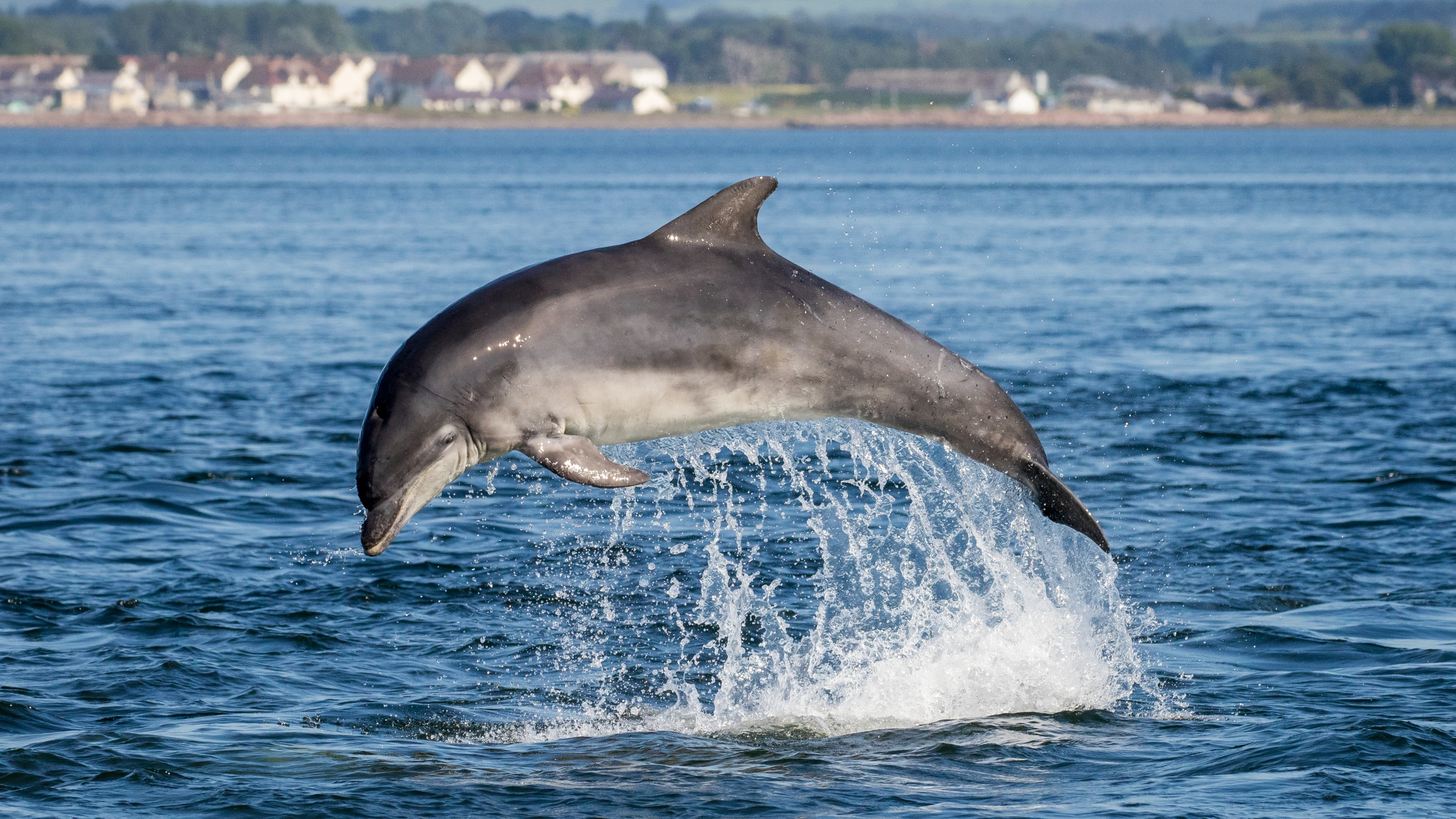 A bottlenose dolphin is seen in a file photo. (Credit: iStock / Getty Images Plus)