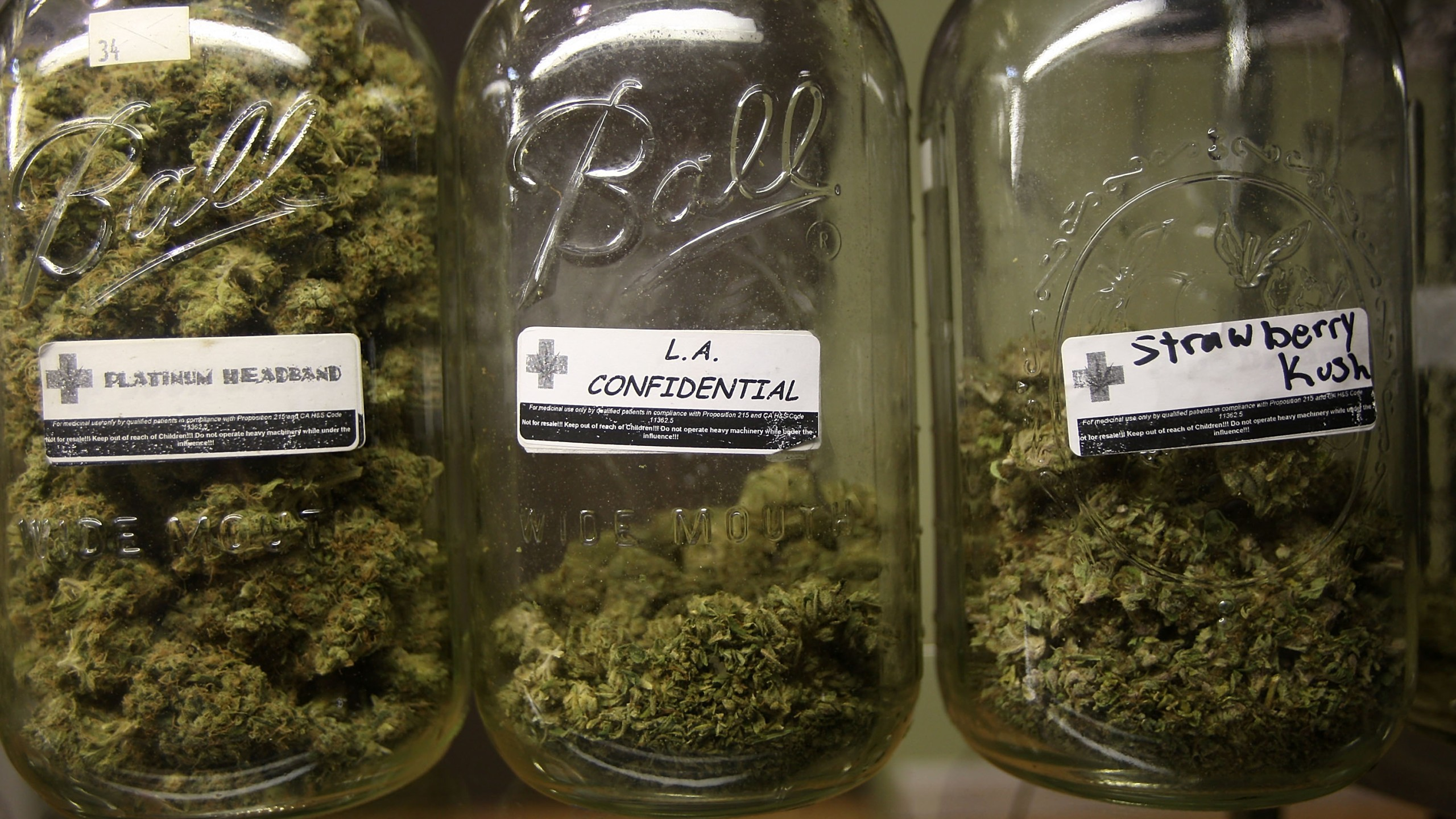 Platinum Headband, L.A. Confidential and Strawberry Kush are among several types of marijuana on display at a medical marijuana dispensary in Los Angeles on Oct. 19, 2009. (Credit: David McNew / Getty Images)