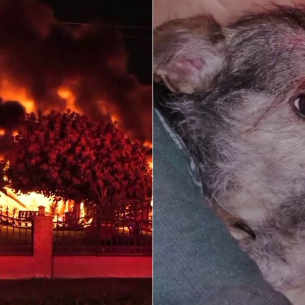 A home is seen ablaze in Hacienda Heights on April 4, 2019. (Credit: Onscene.TV) Chewbacca, one of the dogs at the home (seen on right), helped the family escape the home, they told KTLA. (Credit: OC Hawk)