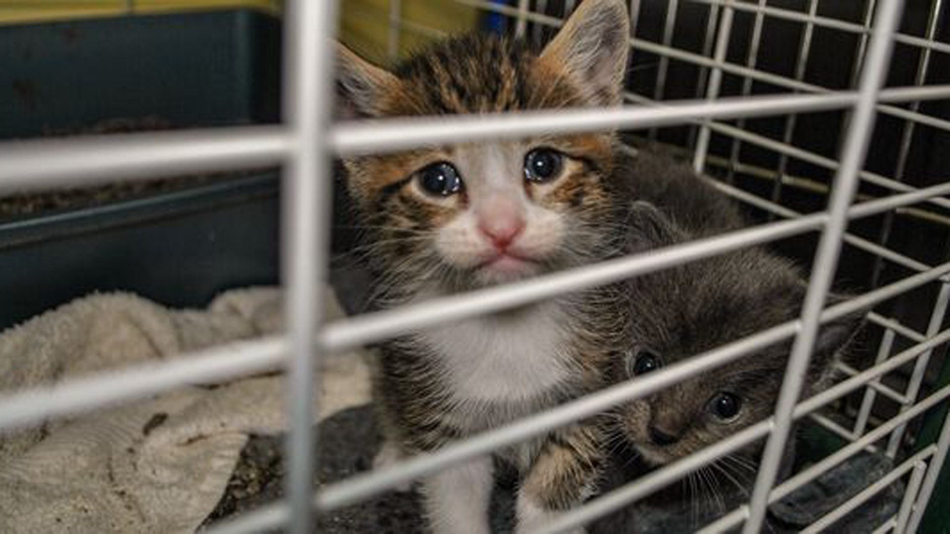 A photo of a kitten in a cage is seen in a Care2 petition that sought to end the cat killings at USDA.