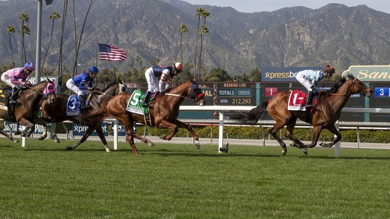 Horses run on the turf course at Santa Anita Park in March 2019. (Credit: J. Schaben / Los Angeles Times)
