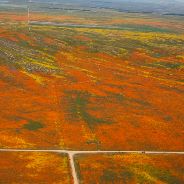 An aerial image from NASA shows a super bloom of wildflowers in the Antelope Valley on April 2, 2019.
