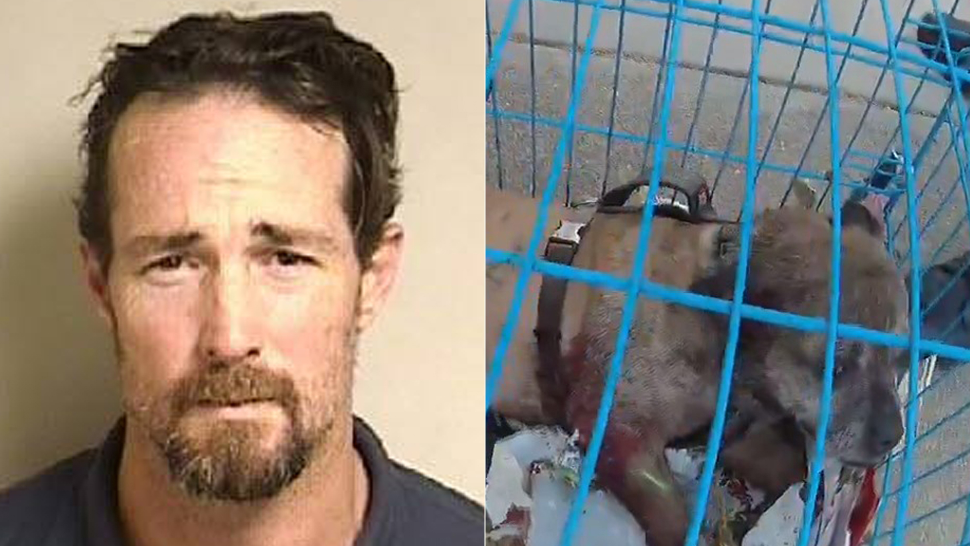 Jeremiah Weberling is pictured next to a photo of one of the 10 dogs he is accused of abusing. He was arrested on suspicion of animal cruelty in Concord, Calif. on May 3, 2019. (Credit: Concord Police Department via Facebook)